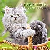 Tierfreundschaften 2018 - Animal Friends - Broschürenkalender (30 x 60 geöffnet) - Tierkalender - Wandplaner