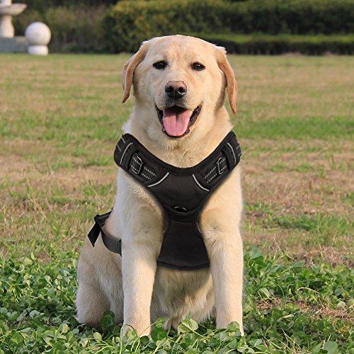Funkeen® Hundegeschirr reflektierend für große, mittelgroße Hunde | einstellbar weich Brustgeschirr Sicherheitsgeschirr | Geschirr Hund Auto | Sport Training Outdoor | L Schwarz