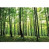 Vlies Fototapete 350x245 cm PREMIUM PLUS Wand Foto Tapete Wand Bild Vliestapete - Wald Tapete Bäume Wald Sonne Wiese grün - no. 528