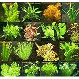 150 Plantas de agua Conjunto XXL, Fertilizante, Acondicionador
