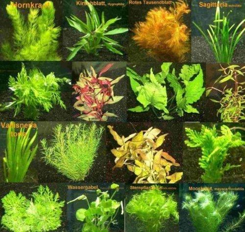 pflanzen aquarium strömung