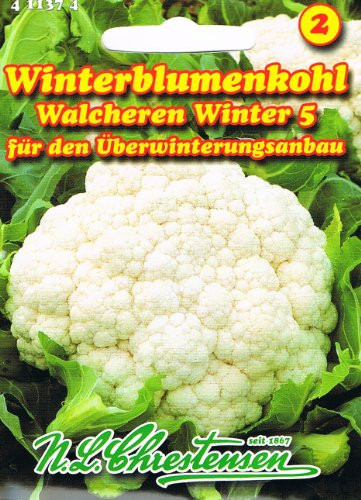 Blumenkohl Walcheren Winter 5 (Portion)