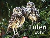 Eulen - Kalender 2019 - Weingarten-Verlag - Wandkalender - 44 cm x 34 cm