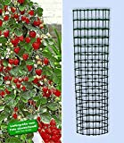 BALDUR-Garten Kletter-Erdbeere 'Hummi' und Dekorativer Rankturm;1 Set