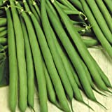 #4: Dwarf French Bean High Yield Vegetable Seeds Kitchen Garden Pack by Creative Farmer