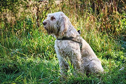 Hunter Norvegese Imbracatura per Cani Caccia