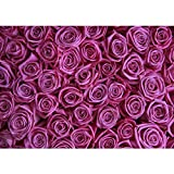 Vlies Fototapete PREMIUM PLUS Wand Foto Tapete Wand Bild Vliestapete - Blumen Rose Blüte - no. 183 Blumen Rose Blüten Natur Liebe Love Blüte Lila, Größe:200x140cm Vlies