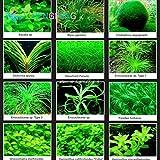 100 semillas de césped de las PC del acuario Mini Plantas acuáticas Semilla del tanque cubierta de hierba embellecimiento de los pescados de la planta DIY Hierbas * regalo del reloj Raras
