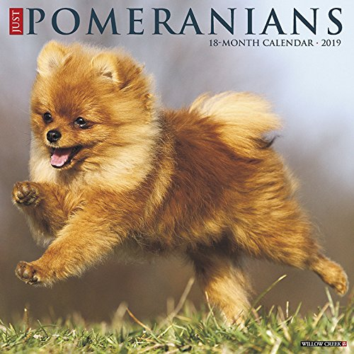 Just Pomeranians 2019 Wall Calendar (Dog Breed Calendar)
