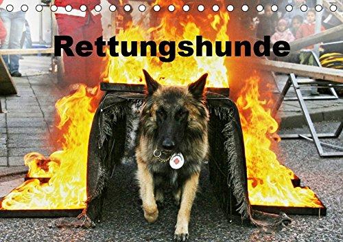 Rettungshunde (Tischkalender 2019 DIN A5 quer): Rettungshunde bei der Arbeit (Monatskalender, 14 Seiten ) (CALVENDO Tiere)