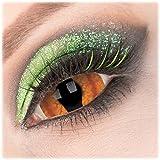 Farbige orange 'Shadowcat' Sclera Kontaktlinse 1 Paar Crazy Fun 22 mm Kontaktlinse mit Behälter zu Fasching Karneval Halloween - Topqualität von 'Giftauge' ohne Stärke