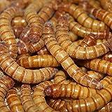 Mehlwürmer, lebend, 1 kg Preisknüller