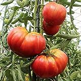 10 Samen Ochsenherz Belmonte Tomate – herzförmige, gerippte Fleischtomate