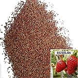 Portal Cool Anna: 1 Beutel 100 Samen Rote Erdbeersamen Hausgarten Obstpflanze Süß und lecker