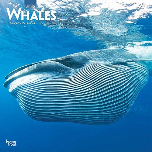 Whales - Wale 2019 - 18-Monatskalender (Wall-Kalender)