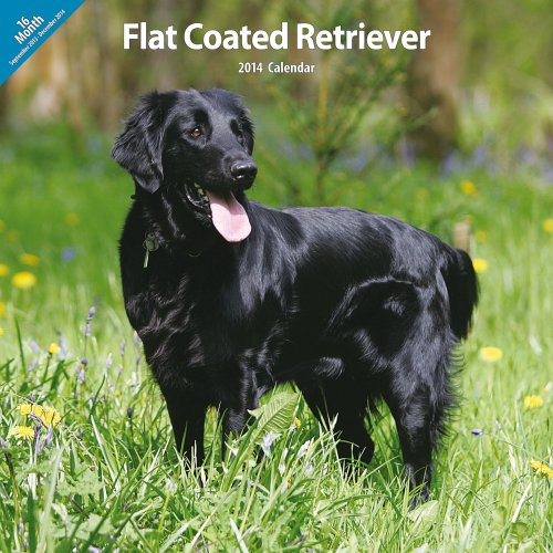 Magnet & Steel Flatcoated Retriever Traditionelle 2014 Wand Kalender