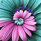 FOReverweihuajz 100Pcs seltenen Wunder Gänseblümchen Seeds beautiful Gänseblümchen ornamental Garten Bonsai Pflanze