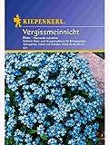 Myosotis sylvatica Vergissmeinnicht blau