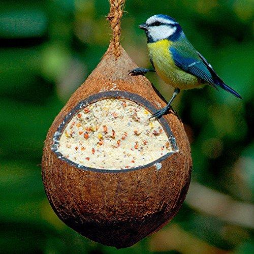 Gärtner Pötschke Gefüllte Kokosnuss mit Samen - Vögel Die Samen Für