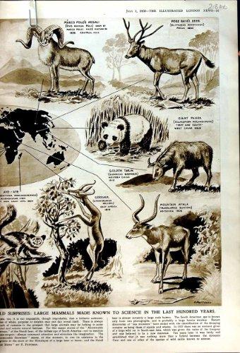 termiti-1950-dellaustralia-megalith-builders-queen-mary