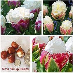 5 Es cierto que los bulbos del tulipán, (no tulipán Semillas), la flor de los bulbos de los tulipanes, planta de bricolaje exterior Rizoma, Bonsai Pot para jardín
