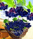 ShopMeeko Seeds:Genuine! 100 Pcs/Bag Annual Fruit and Vegetable Plants Aronia Viking.DIY Home Garden&Bonsai Plantas