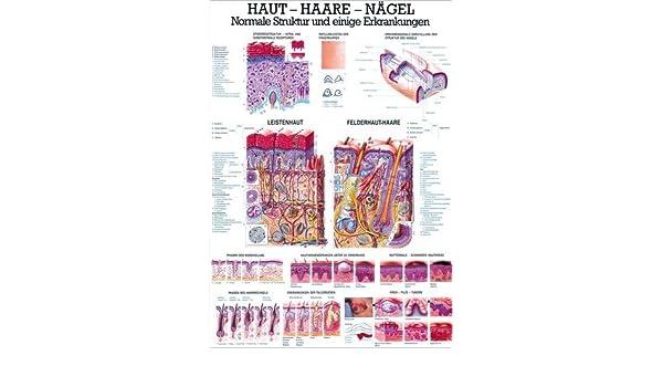 70 cm x 100 cm laminiert Ruediger Anatomie TA12LAM Das menschliche Herz Tafel