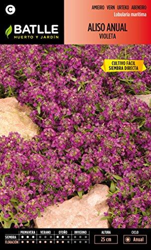 semillas-batlle-090602bols-aliso-anual-violeta