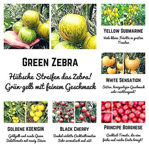 Exotische Bio- Tomatensamen mit ausgewählten, exotischen Tomaten, wie Green Zebra, Black Plum undWhite Sensation. 6 unterschiedliche Sorten in Bio Qualität machen jedes Gericht zu einem Hingucker - Je
