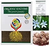 #9: POLIANTHES TUBEROSA / TUBEROSE WHITE FLOWER BULBS (14 BULBS IN EACH PACK ) WITH ORGANIC ENZYME – (THE GROWTH GRANULES FOR YOUR PLANTS). THIS IS A NUTRITIONAL SUPPLEMENT FOR SOIL WHICH ARE 100% ORGANIC BY GATE GARDEN