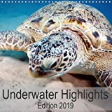 Underwater Highlights Edition 2019 (Wall Calendar 2019 300 × 300 mm Square): Enjoy the impressive underwater world (Monthly calendar, 14 pages ) (Calvendo Animals)