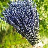 TooGet Lavendel getrocknet Ultra Blau Bündel 100 Stiele (40 cm - 45 cm lang) für Home Decor, Handwerk, Geschenk, Hochzeit oder jeden Anlass