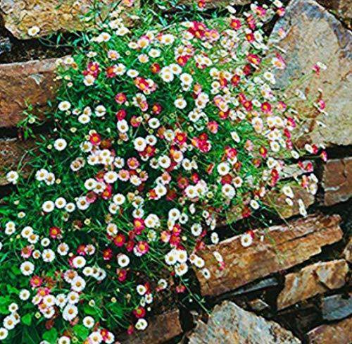 Notfall Seed Vault 2 100 Samen Non Gmo Gemusesamen Ferry Bio Saatgut Nicht Nur Pflanzen Survl Garten Saatgutaufbewahrung Schutzkleidung Zubehor