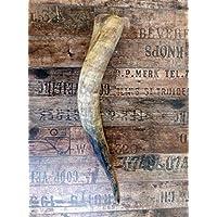 Naturhorn Watussi Longhorn, ca. 50-55 cm, 1,0-1,2 Liter Volumen, für Met-Wikinger-LARP- Mittelalter-Drinking Horn-Methorn, Germanenhorn, ein echtes Wikinger Geschenk