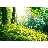 Vlies Fototapete 200x140 cm PREMIUM PLUS Wand Foto Tapete Wand Bild Vliestapete - SUNNY FOREST - Wald Bäume Natur Baum grün Sonnenschein Sonne - no. 030