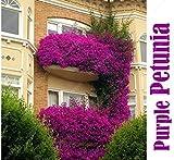 100seeds Topfblumensamen Garten Petunia Hanging Petunie Samen Balkon Bonsai Pflanzen für Garten & Heim Einfach zu wachsen