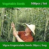 Shopmeeko ^^ Vigna Unguiculata de frijol largo chino ^^^^ 500 piezas, vegetales de haba serpiente de frijol de tallo largo ^^^^, frijol mini jardín Yardlong ^^^^
