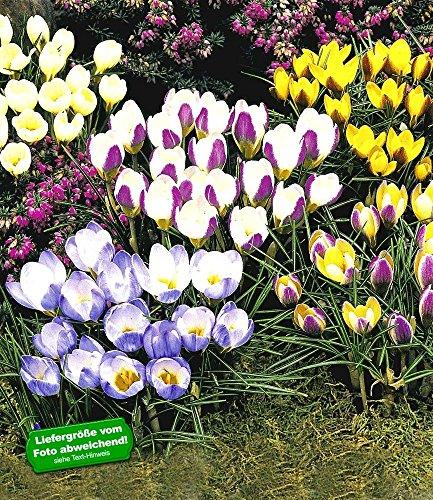 BALDUR Garten H-1633