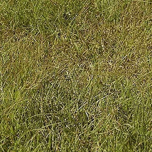 1/4 Lb Buffalo Gras Ureinwohner Grass Seeds -