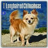 Longhaired Chihuahuas - Langhaar-Chihuahuas 2017 - 18-Monatskalender mit freier DogDays-App: Original BrownTrout-Kalender [Mehrsprachig] [Kalender] (Wall-Kalender)