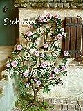 SwansGreen 10 PC Silk Kletterrose Blumensamen Bonsai Efeu-Rebe Hängen Schöne Staude Blumen Garland Dekoration-Partei Haus 12