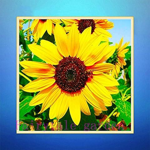 vendita calda 5pcs / bag semi Clivia fiore fogliame coperta bonsai fiore casa fai da te giardino delle piante Air Purify