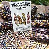 Portal Cool Glass Gem Corn Seeds (~ 50): Biologisch, Nicht-GVO-Erbstück Samen-Paket