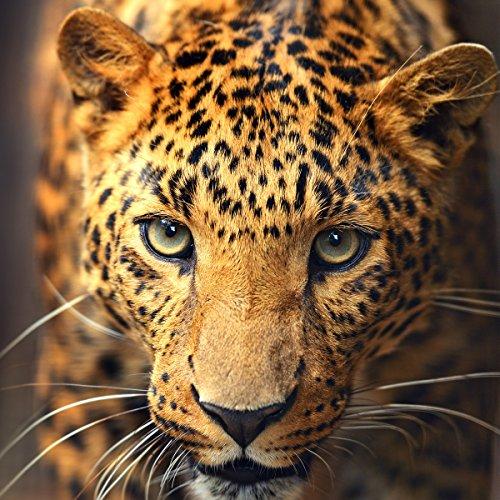 Wallario Glasbild Leopard in Nahaufnahme bein Laufen - 50 x 50 cm in Premium-Qualität: Brillante Farben, freischwebende Optik (Leopard Bein)