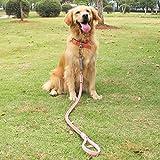 Anti-Burst-Burst-Mittelgroße Hunde Große Hunde-Rindsleder-Leinen-Kragen-Hundekette Goldenes Haar-Weg Das Hundeseil-Zuggurt-Satz, Rosa, Xs-