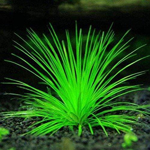 Homeofing 1000 Stück gemischte Grassamen, Aquarium, Dekoration, Wasser, grüne Wasserpflanzensamen
