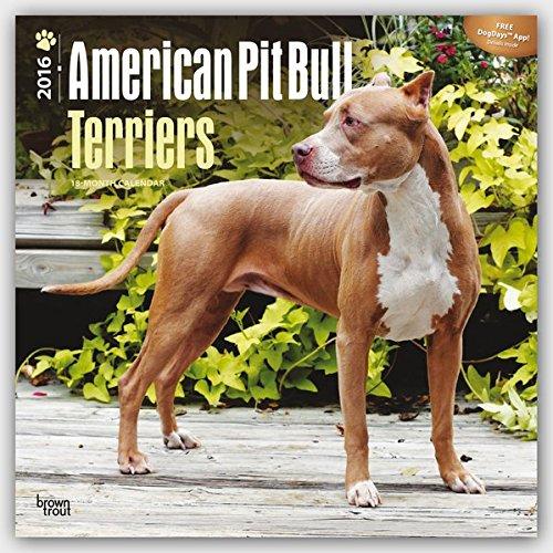 American Pit Bull Terriers 2016 Calendar