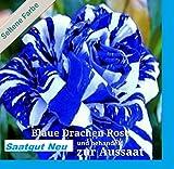 20x Blaue Drachen Rose weiß blaue Streifen Saatgut Blumensamen Samen Pflanze Rarität Garten Blumen Rosen Neuheit #112
