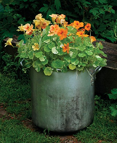 Flower Seeds : Nasturtiums Jewel Mix Home Garden Flower Seeds Pot Garden Garden [Home Garden Seeds Eco Pack] Plant Seeds By Creative Farmer  available at amazon for Rs.99