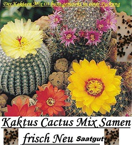 15x Kaktus Cactus Mix Samen Saatgut frisch Pflanze Neue Ernte 100% Ausbeute Zimmerpflanze Zimmer Pflanze Neuheit #86 (Neuheit Ernte)